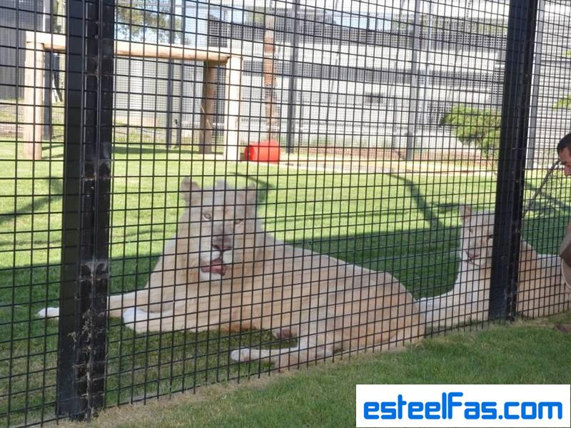 wire mesh as animal Cage